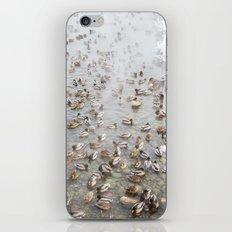 Mallard Ducks iPhone & iPod Skin