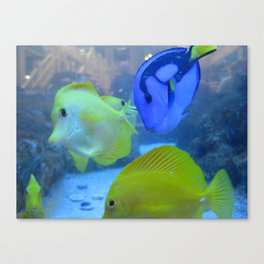 Fish Canvas Print