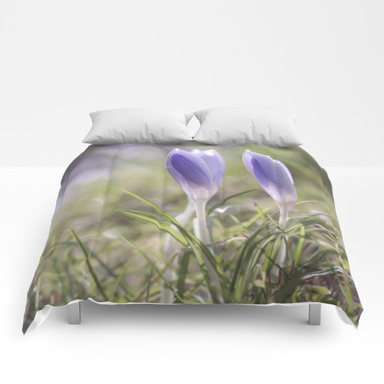 Crocuses at early backlight - Blue flowers - flower Comforters