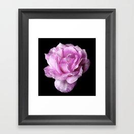 Eleanor's Rose Framed Art Print
