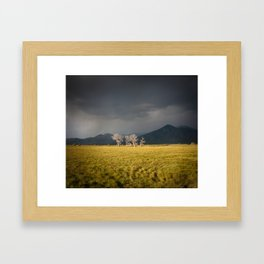 Lone Trees in Taos, New Mexico Framed Art Print
