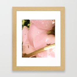 ant and flower Framed Art Print