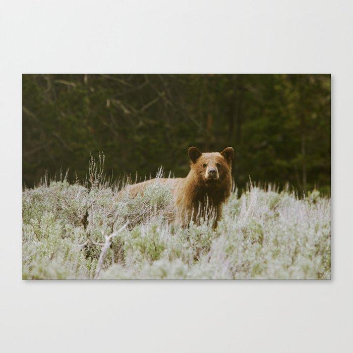 Bush Bear Canvas Print