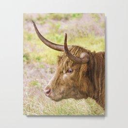 Longhorn 2 Metal Print