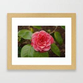 Flowers of Ireland Framed Art Print