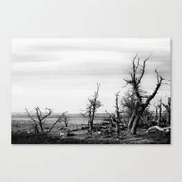 Naked Forest Canvas Print