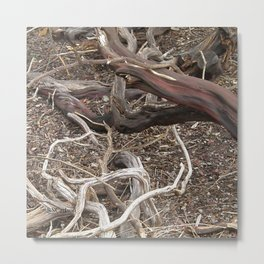 TEXTURES - Manzanita in Drought Conditions #3 Metal Print