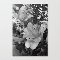 Freesia 3 B&W Canvas Print