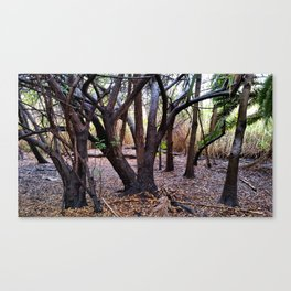 SDRV   River Bed Canvas Print