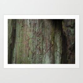 California Red Wood Art Print
