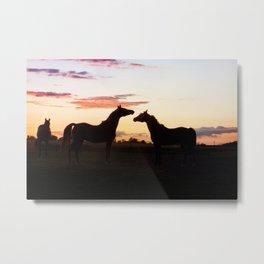 Arabian horse sunset Metal Print