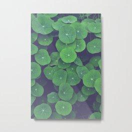 Nasturtium Leaves Metal Print
