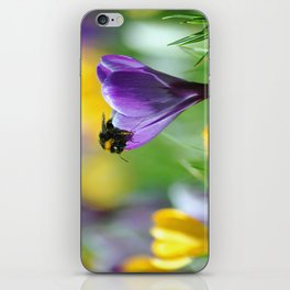 Bumble Bee on Crocus iPhone Skin