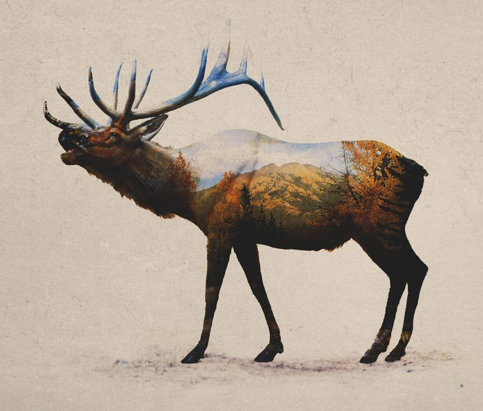 The Rocky Mountain Elk Metal Travel Mug