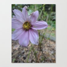 Light Purple Flower Canvas Print