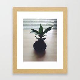 Kokedama Shadows Framed Art Print