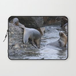 California Sea Lions in Monterey Bay Laptop Sleeve