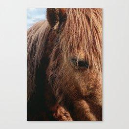 Brooding Pony Canvas Print