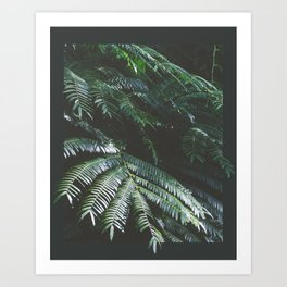 Rainforest Flora II Art Print