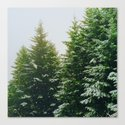 Winter Pine Tree Forest (Color) by nocolordesigns