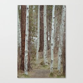 A Walk Through The Aspen Canvas Print
