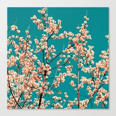 willow catkin II Canvas Print