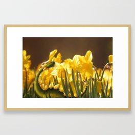 The Daffodil nommer Framed Art Print
