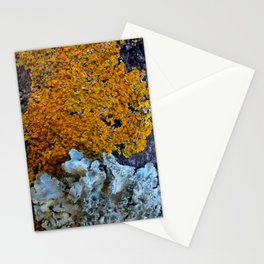 Tree Bark Pattern # 6 with Orange and Blue Lichen Stationery Cards