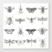 insects Canvas Prints featuring Insects by Elizabeth Clowes Illustration
