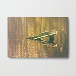Alligator in the Afternoon Metal Print