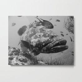 Grouper Metal Print