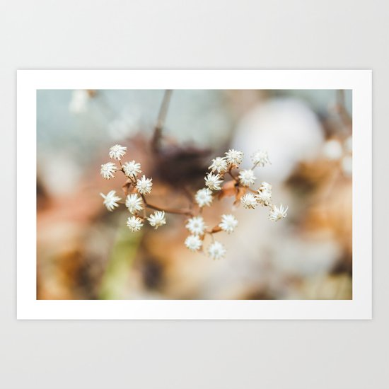 Winterflower Art Print