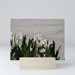 Hyacinth background Mini Art Print