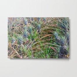 Pineapple Plantation Metal Print