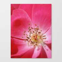 hot pink Canvas Prints featuring Hot Pink by Zayda Barros
