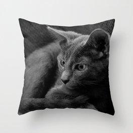 Russian Blue Kitten Portrait 2 Throw Pillow