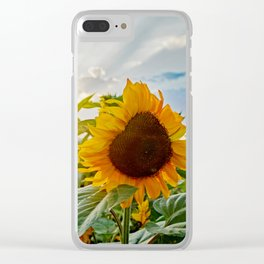 Sunflower in the sunset Clear iPhone Case