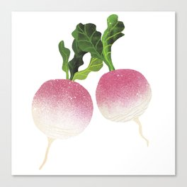 Turnip Illustration Canvas Print