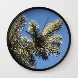 All spruced up and still blue - Blue spruce, blue sky 1564 Wall Clock