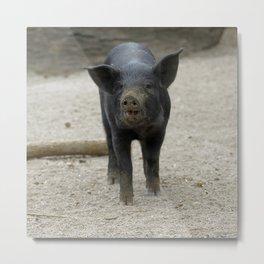 Pig_2015_0401 Metal Print