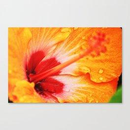 Rain Drops on a Flower Canvas Print