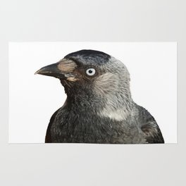 Jackdaw (Corvus monedula) Bird Portrait Vector Rug