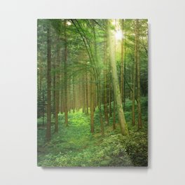 Forest In Morning Light Metal Print