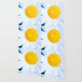 SMILE - Daisy Flower #2 Wallpaper
