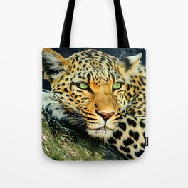 Leopards Gaze 3 Tote Bag