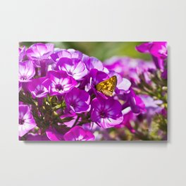 Skipper Butterfly On Flower Metal Print