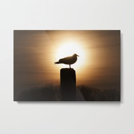 Sunset Seagul Metal Print