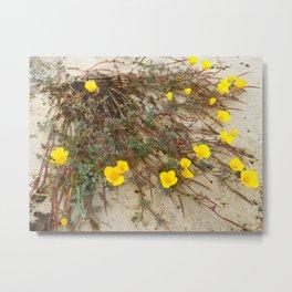Wild California Beach Poppies Metal Print