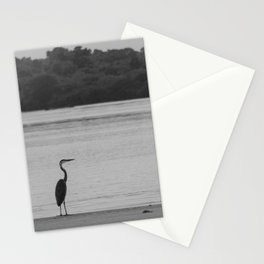 Great blue heron hunting in the mangrove Stationery Cards