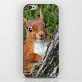 Nature woodland animals smiling squirrel iPhone Skin